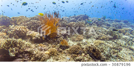 Coral reef and fish in tropical sea underwater 30879196