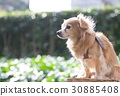 pet, pets, mixed breed dog 30885408