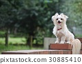 pet, pets, mixed breed dog 30885410