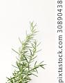rosemary, herb, herbal 30890438