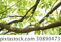 나무 30890473