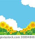 sunflower, sunflowers, summer 30894846