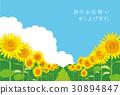 sunflower, sunflowers, summer 30894847
