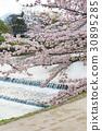 鴨川 京都 日本 30895285