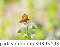花朵 花卉 花 30895493