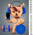 智能手机 小狗 狗 30896848