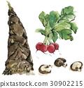 수채화 물감, 수채화, 야채 30902215