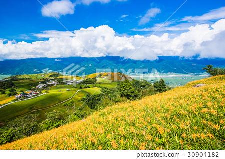 대만 Hualien Fuli 육십 스톤 마운틴 황금 바늘 플라워 아시아 대만 화롄 산 30904182