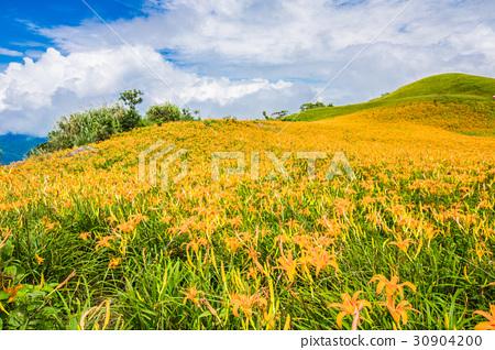 台灣花蓮富里六十石山金針花海Asia Taiwan Hualien Mountains 30904200