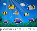 Scene with colorful fish swimming underwater 30929143