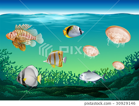 Many fish swimming under the ocean 30929146