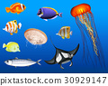 Different types of sea animals 30929147