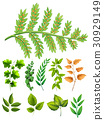 Different types of leaves 30929149