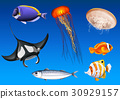 Different kinds of sea animals underwater 30929157
