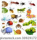 Different types of insects 30929172