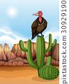 scene bird vulture 30929190