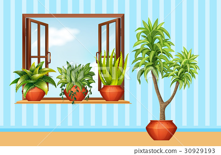 Different plants in claypot in the room 30929193