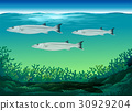Three fish swimming under the sea 30929204