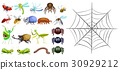 Different types of bugs and spiderweb 30929212