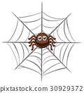 Spider on spider web 30929372