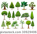 Different types of green trees 30929406