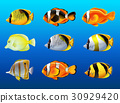 Different kinds of fish under the ocean 30929420