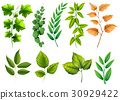 Different types of green leaves 30929422