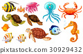 Different kinds of sea animals 30929432