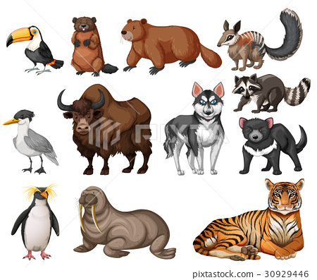 Different types of wild animals 30929446
