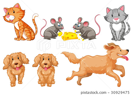 Set of dogs and cats 30929475
