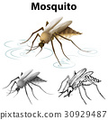 Drafting character for mosquito 30929487