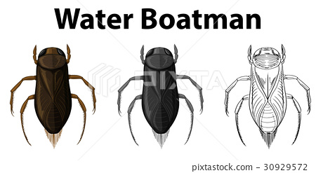 Doodle character for water boatman 30929572