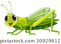 Grasshopper with happy face 30929612
