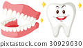 Clean teeth of human 30929630