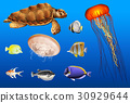 Different types of sea animals in ocean 30929644