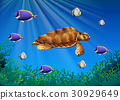 Sea turtle and fish swimming underwater 30929649
