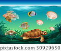 Underwater scene with many sea animals 30929650