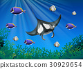 Stingray and many fish under the ocean 30929654