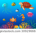 Sea animals swimming under the ocean 30929666