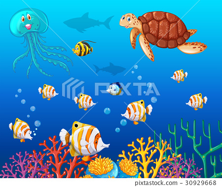 Many types of sea animals under the ocean 30929668