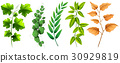 Different types of green leaves 30929819