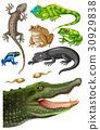 Different types of reptiles 30929838