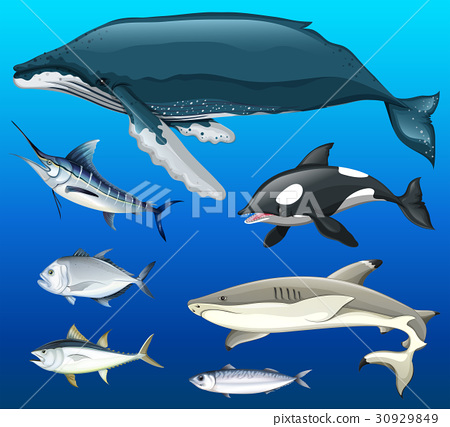 Different types of fish under the sea 30929849