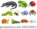 Different types of insects 30929852