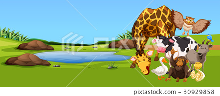 Wild animals living by the pond 30929858