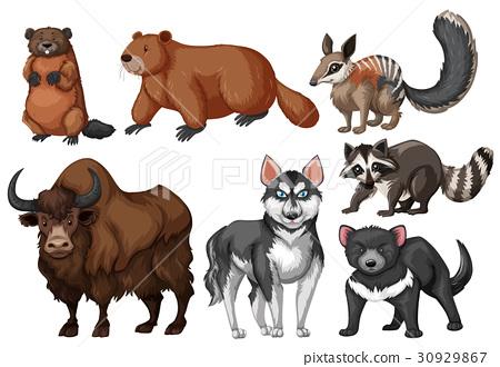 Many types of wild animals 30929867