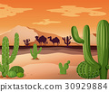 Desert scene with cactus and sunset 30929884