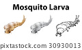 Mosquito larva in three sketches 30930013