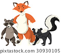 Fox and raccoon on white background 30930105