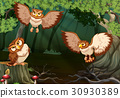 Three owls flying in forest 30930389